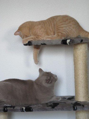 Arbre chat fait maison pas cher et colo - Arbre a chat simple ...