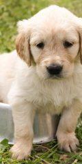 Les 5 races de chiens qui me font complètement craquer